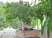 conseils pour soigner votre Ficus