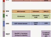 #trendsincellbiology #IQGAP #signalisationcellulaire #membrane #noyau Chorégraphie signalisation cellulaire IQGAP membrane noyau