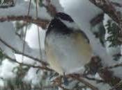 Coup pouce oiseaux, mais plus