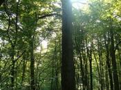 Auprčs Grand-arbre Michel Deydier