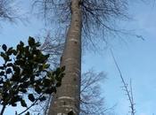 Carnet Pour quelques grands arbres