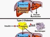 #Cell #AcétylCoA #foie #tissuadipeux #inflammation #diabètedetype2 #insulinorésistance Acétyl hépatique liens entre inflammation tissu adipeux, insulino-résistance diabète type