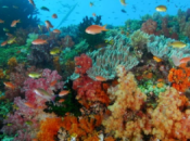 récifs artificiels question