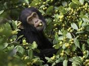 piste grands singes Muséum d'Histoire Naturelle