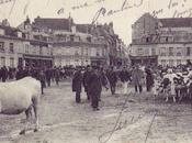 CHARTRES Marché Vaches 1914