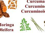 curcumine Moringa Oleifera alliance surpuissante