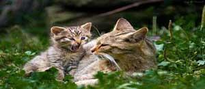 Comment retrouver chat avec collier émetteur pour
