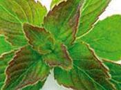 L'huile complète Périlla face allergies