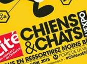 Chiens chats, expo poil