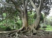 arbres tantra