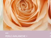roses Avalanche font