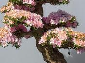 L'art bonsaï