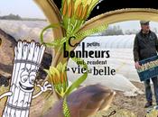 Saison asperges wallonnes Stéphane Longlune Jurbise agriculture raisonnée