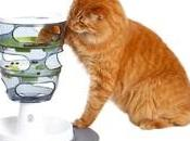 Alimentation base pour chats