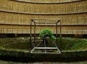 bonsaï suspendu Charleroi