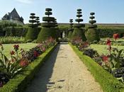 beauté cœur vignes Château Pizay…