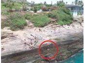 Drone sauvetage d'un chien avalé vague