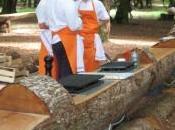 arbre cuire