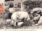 1927 efforts ligue pour repopulation France