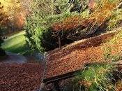 Arboretum Vallon l'Aubonne