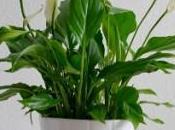 plantes vous aident mieux dormir