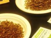 Micronutris insectes dans assiettes