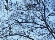 population territoire oiseaux sont pleine expansion