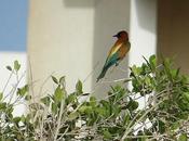 oiseaux couleurs très chatoyantes...