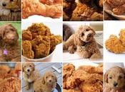 Puppy bagel