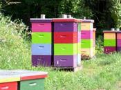 millions fleurs sauvages pour sauver abeilles! #ramenonslesabeilles