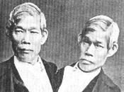 Siamois, frères Chang