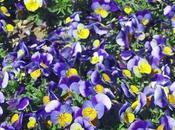 cache dans fleur