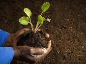 Comment Africains rendent leur fertile sans endommager terre