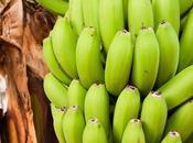Recette biomasse bananes vertes, origine vertus pour santé (Brésil)