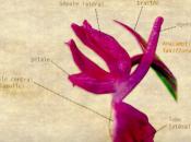 Petit tour d'horizon orchidées France approche leur biologie