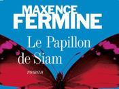 papillon Siam Maxence Fermine