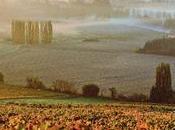 vigne française obligée s'adapter bouleversements climatiques