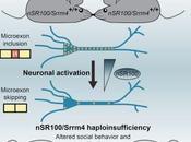 AUTISME: protéine suffit expliquer Molecular Cell