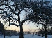 janvier début février, entretenez arbres fruitiers