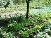 Apprendre cultiver potager sans pesticides