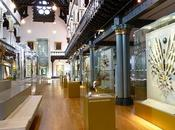 L'Hunterian Museum Glasgow collections mers