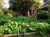 Combattre radicaux libres avec antioxydants fruits légumes