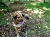 Avoir chien appartement bonheur concessions