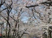 Voyage Kyoto Gion Chemin Philosophie