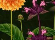 """Animation botanique """"Histoire fleurs"""""""