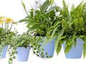 L'importance plantes dépolluantes dans appartements.