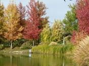 Pourquoi feuilles tombent elles automne