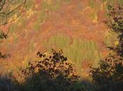 Dans l'automne flamboyant