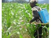 Cameroun Quels freins micro-assurance agricole