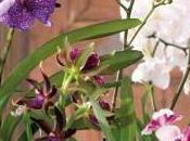 bonnes raisons choisir orchidées chez fleuriste